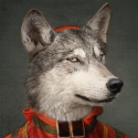 Plateau mural le loup Ibride